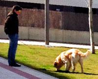 Policías de paisano en Sarriguren multarán a los que no recojan excrementos de perro