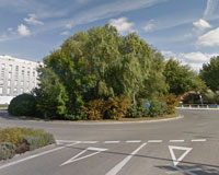 Hoy y mañana se podarán los árboles de la rotonda de entrada de Sarriguren