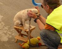 El primer concurso canino de Sarriguren se celebró en fiestas
