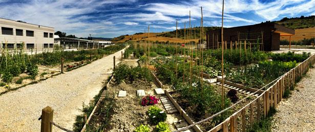 huertos_urbanos_sarriguren_plantacion