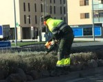 Continúan los trabajos de jardinería en la avenida Reino de Navarra de Sarriguren
