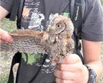 Revisión de las cajas nido de autillo en Sarriguren